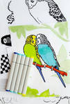 OMG Budgies Colouring Book by calzephyr