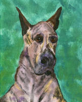 Rudy - Great Dane - An oldie by calzephyr