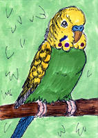 Green Budgie ATC by calzephyr