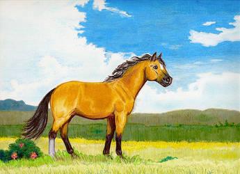 Little Horse on the Prairie by calzephyr