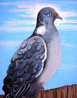Gray Pigeon by calzephyr
