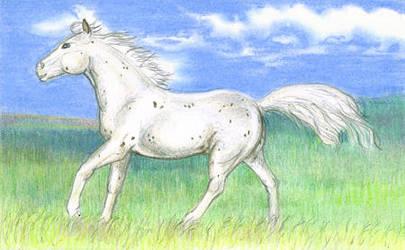 Running Appaloosa by calzephyr