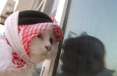 Arab Cat by Emiraty