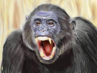 Chimp by indian-prophet