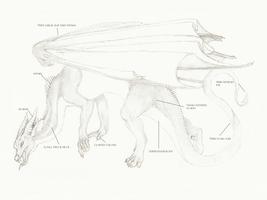 European dragon antomy SKIN by Savamther