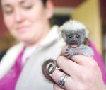 Baby Monkey by RedPigeon