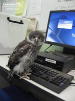 Owl using Computer by RedPigeon