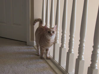 Cute Kitty by sabresteen