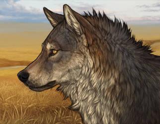 Wolf Practice 2 by mrXylax