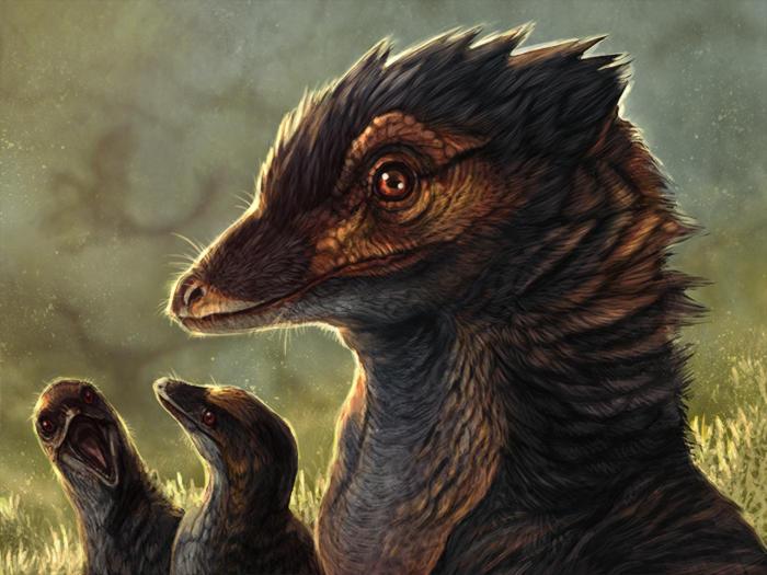 Evosaur: Jinfengopteryx Study by mrXylax