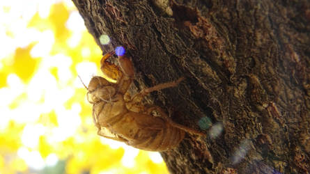 Cicada Shell Fall by spaceturtle