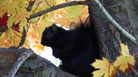 Black Squirrel by spaceturtle