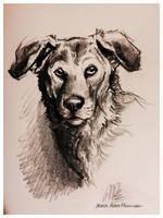 Shelter Dog Portrait by ISHAWEE
