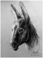 Donkey Head Study by ISHAWEE
