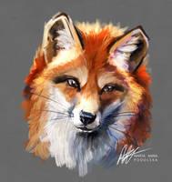 Vixen by ISHAWEE