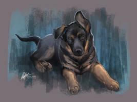 German Shepherd pup by ISHAWEE