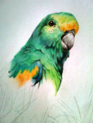 Parakeet (Unfinished) by HeronYourtrace