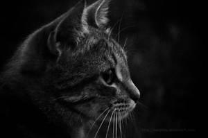 Bw kitten by marphey