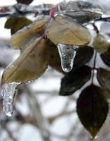 Iced macro 6 by KSnake