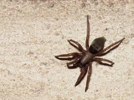 Spider by KSnake