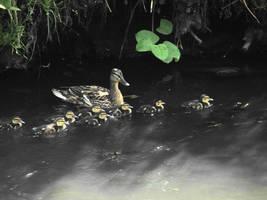 Quack by KSnake