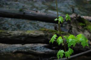 Green by KSnake