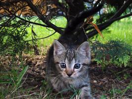 Pussycat by KSnake