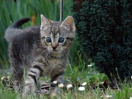 Pussycat 2 by KSnake