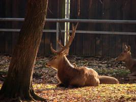 Autumn Pszczyna - Red Deer by KSnake