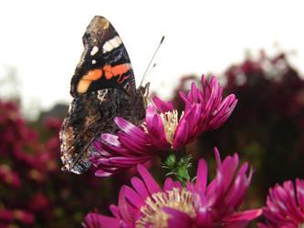 Motyle i pszczoy 2013-10-15 073 by KSnake
