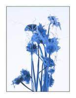 blue. by kilroyhasbeenhere
