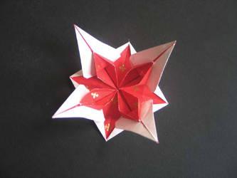 Star flower by MannaOri