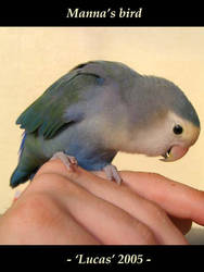 My bird by MannaOri