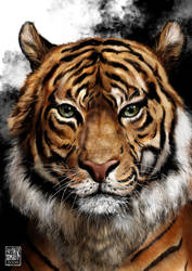 TIGER by millerkit31