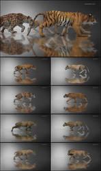 DAZ Big Cat 2 Walk Cycle Animation by JoePingleton