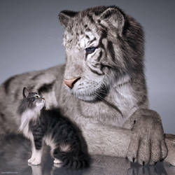 A Tail of Two Kitties by JoePingleton