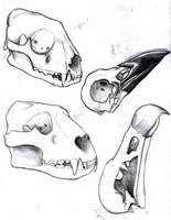 Skull Sketchin by shiverz