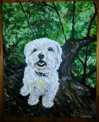 Lola Westie/Bichon Frise by Puppy2388