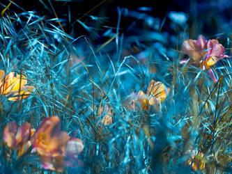 My tulips' ocean by valeriemonthuit