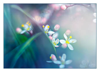 It's time for spring now by valeriemonthuit