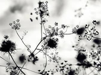 Fragile 2 by valeriemonthuit