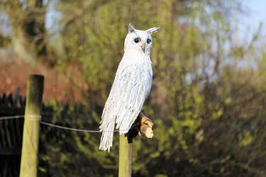 Paper Mache Owl by Vulkanette