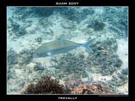 Guam 2 - Trevally by Keith-Killer