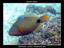 Guam 10 - Orange Lined Trigger by Keith-Killer