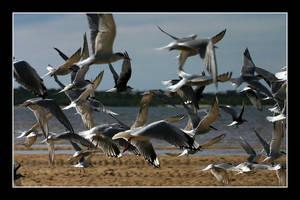 Oz06 - 14 - Birds by Keith-Killer