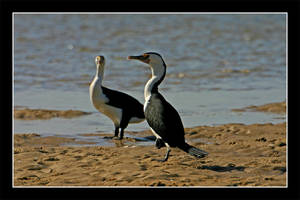 Oz06 - 15 - More Birds by Keith-Killer