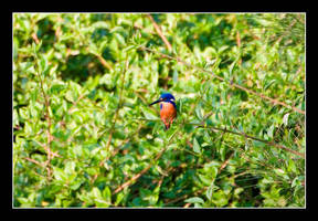 Oz06 - 17 - Kingfisher 01 by Keith-Killer