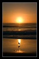 Sunrise Bird by Keith-Killer
