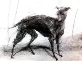 Dog by Uncanny-Oddball
