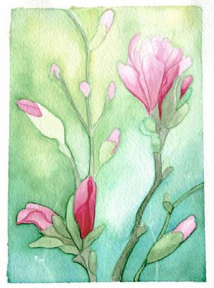 Magnolia by dariatroi